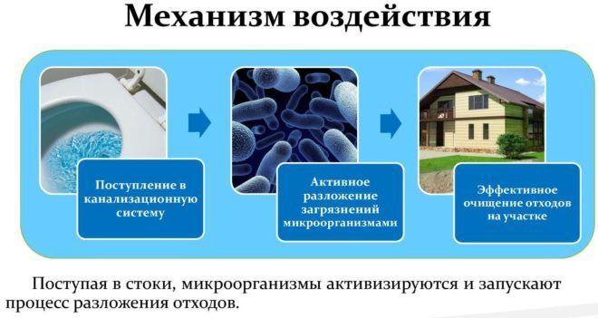 Биологические средства для чистки канализации