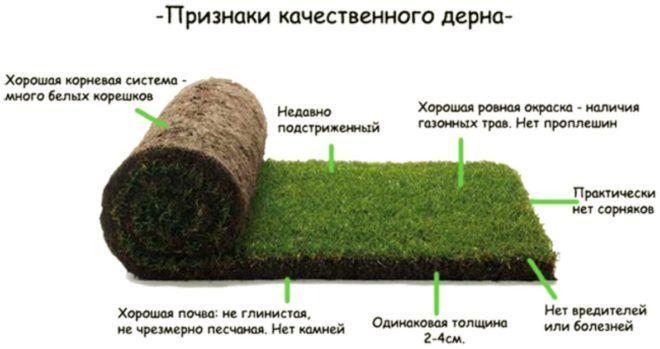 Правила посадки рулонного газона