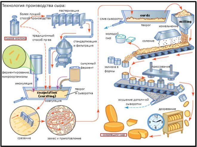 Технология производства сыров