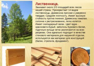 Характеристика древесины из лиственницы