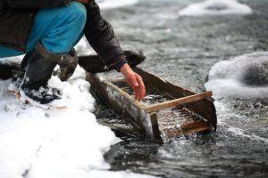 Добывать золото в холодное время года проще чем летом
