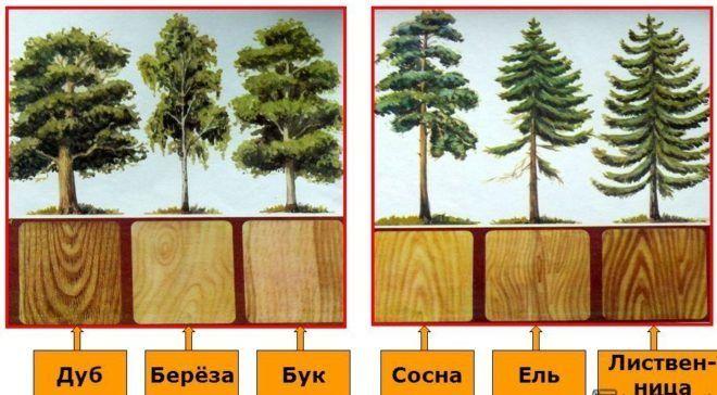 Виды пород древесины