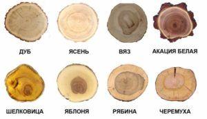 Лиственные породы древесины