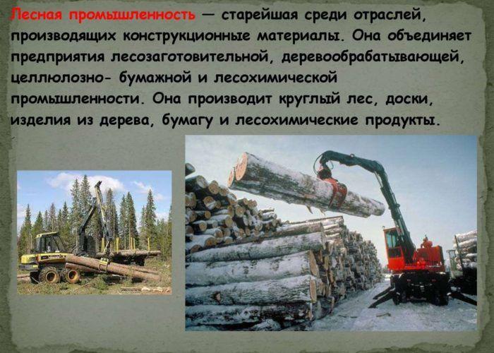 Лесохимическая отрасль