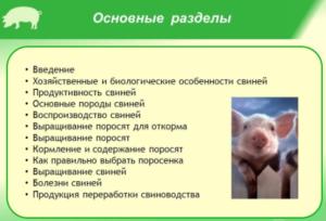 Преимущества свиноводства - основные разделы